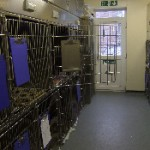 Fully air conditioned kennel wards
