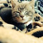 kitten vets